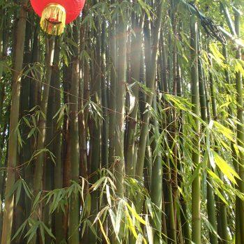 Bamboo, lantern