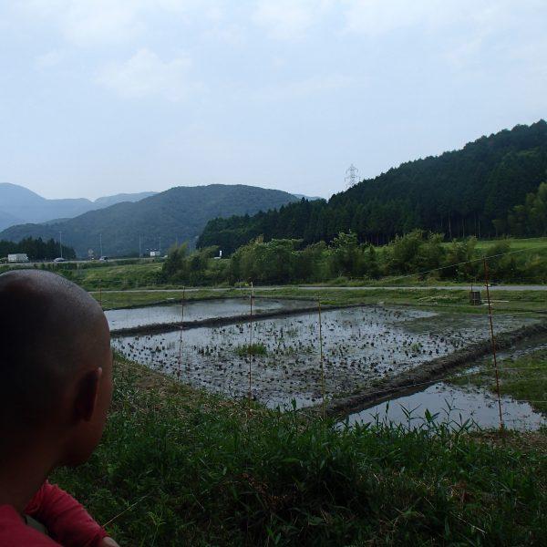 The Small Rice Farm